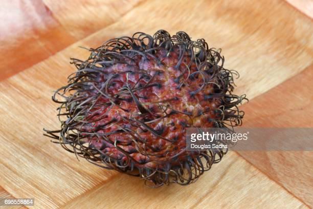 Close up of an Unpeeled Rambutan fruit (Nephelium lappaceum)