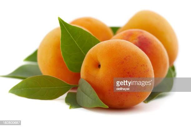 Close up of apricots freshly picked from the tree