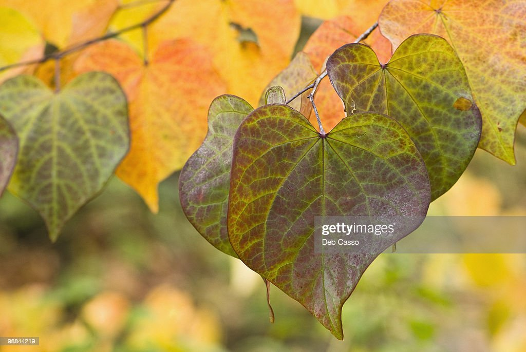 Close up of autumn leaves : Stock Photo