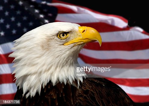 Close up of bald eagle against American Flag background