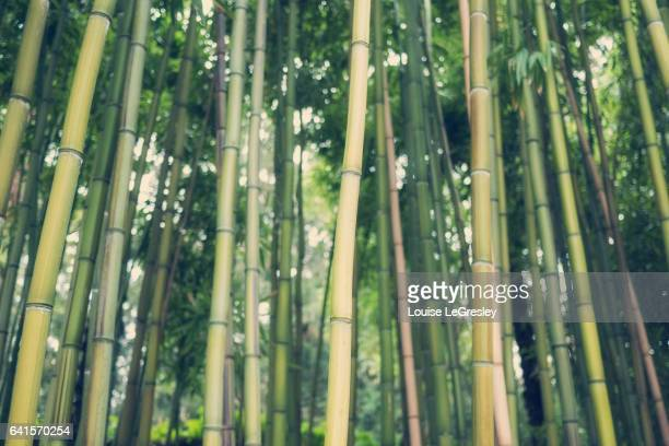 Close up of bamboo trees