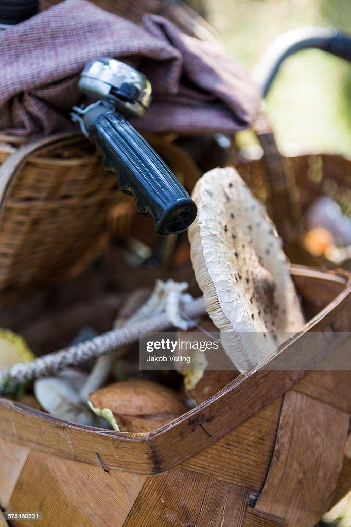 Close up of bicycle handlebar basket with foraged mushrooms