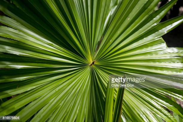 Close up of big leaves in a tropical island