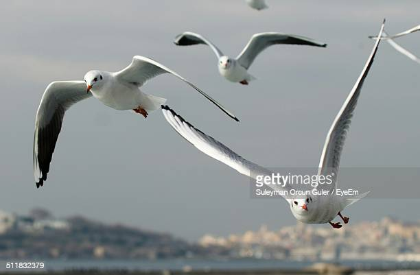 Close up of birds flying