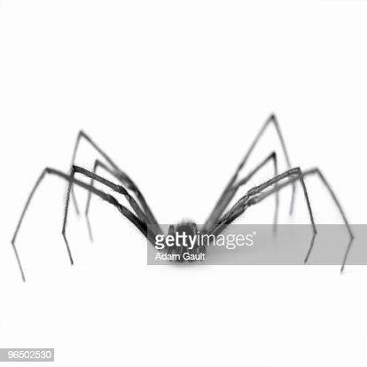Close up of black and white spider : Stockfoto