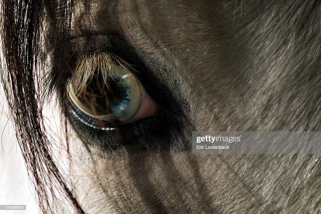 Close up of blue eye of white gypsy pony