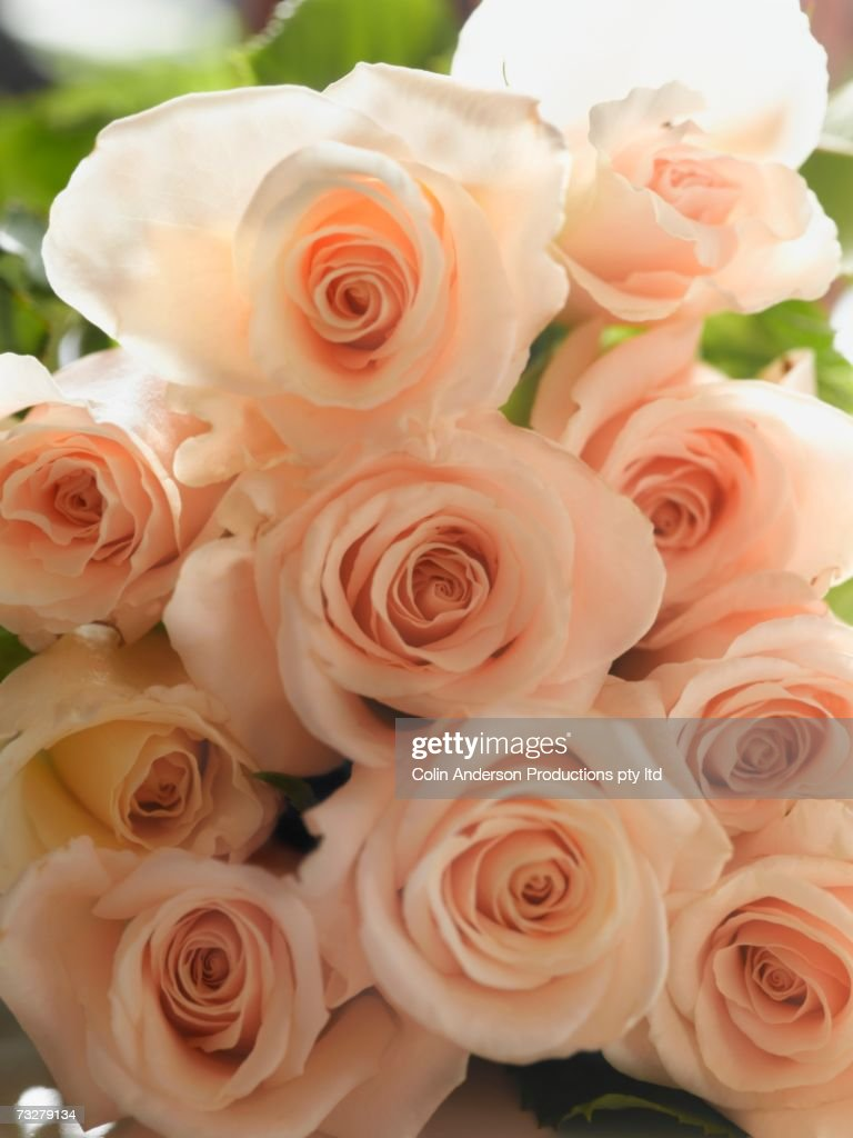 Close up of bouquet of roses : Stock Photo