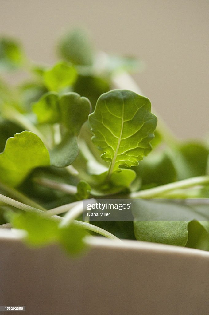 Close up of bowl of herbs : Stock Photo