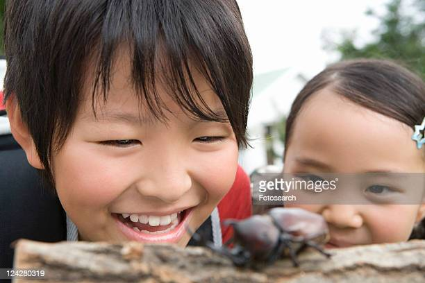 Close up of boy and girl looking at Rhinoceros Beetle