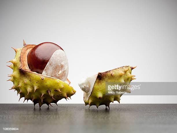 Close up of broken horse chestnut