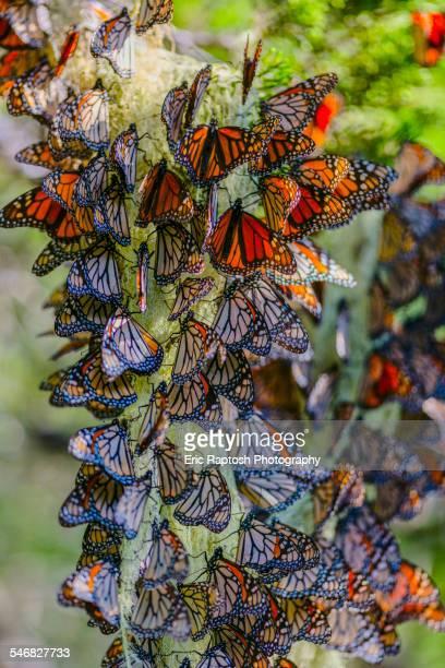 Papillon - Évacue Le Stress
