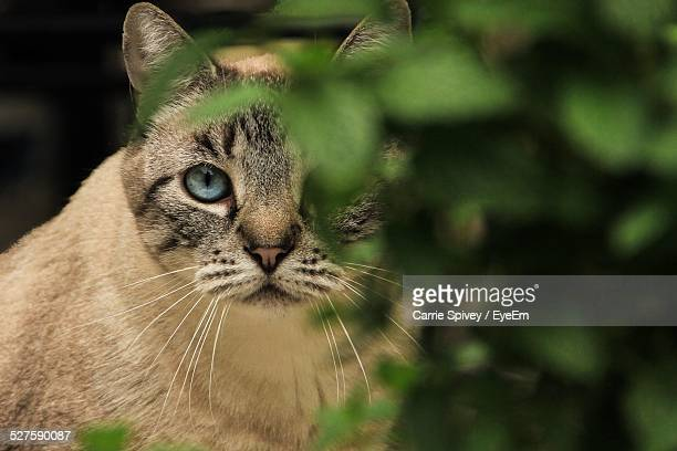 Close Up Of Cat Behind Branch