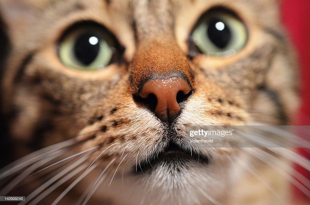 Close up of cat : Stock Photo