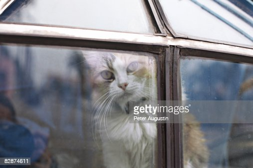 close up of cat : Stockfoto