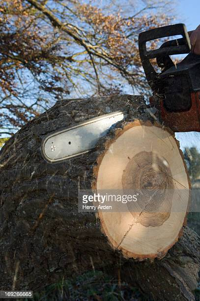 Close up of chainsaw cutting log