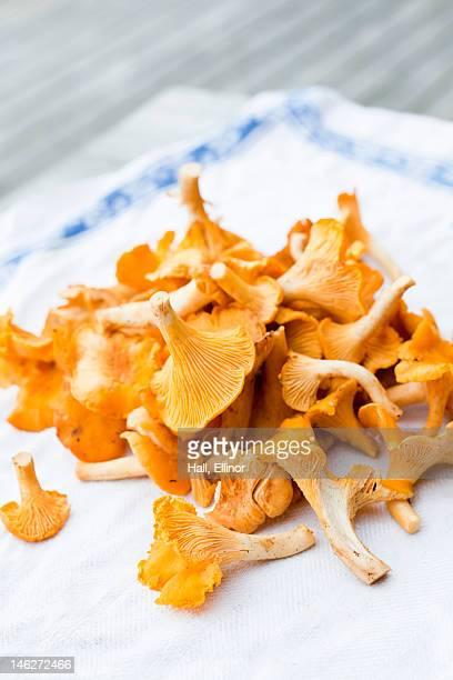 Close up of chanterelle mushrooms on napkin