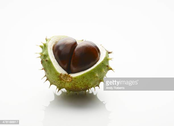 Gros plan de chestnut et exposée graines