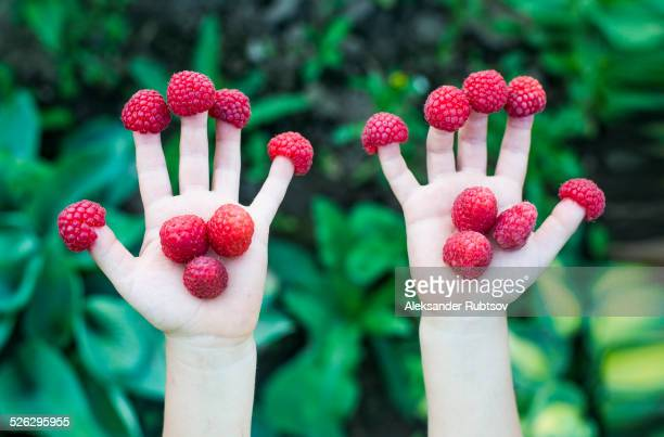 Close up of child holding raspberries on fingers