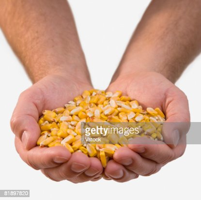 Close up of corn kernels in man?s hands