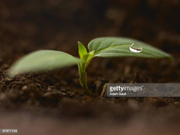 Close up of dew droplet on seedling in dirt