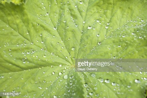 Close up of dew drops on leaf : Stock Photo