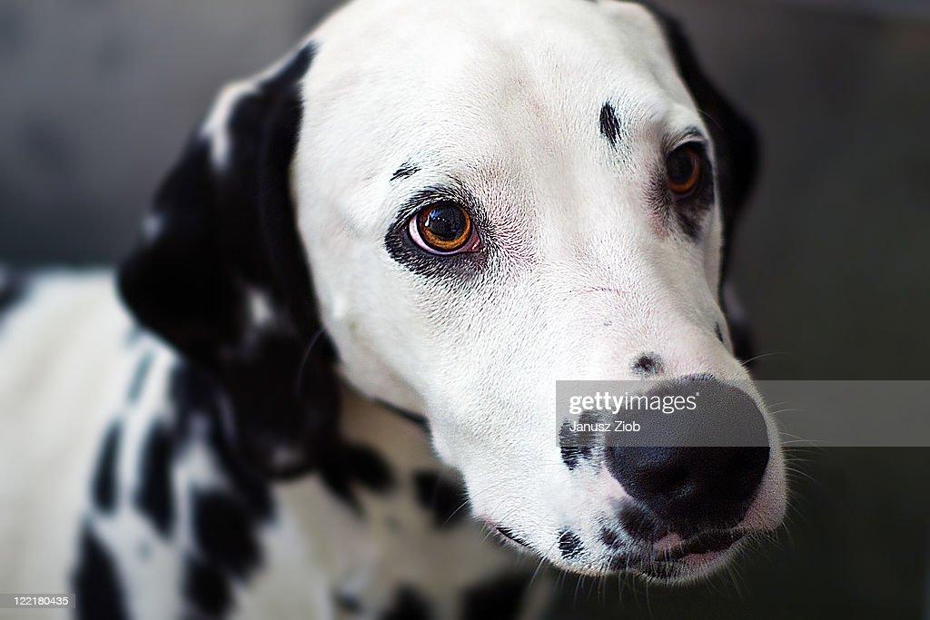 Close up of dog face