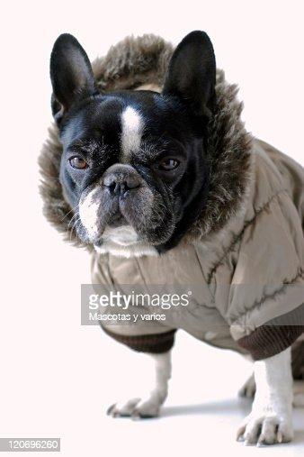 Close up of dog : Stock Photo