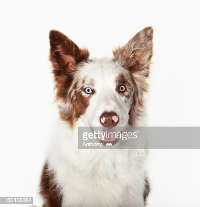 Close up of dog's face : Stock Photo