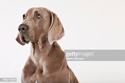 Close up of dog's face : Stock Photo