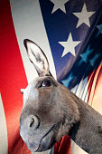Close up of donkey with United States flag in background