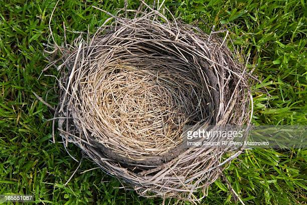 Close up of empty nest