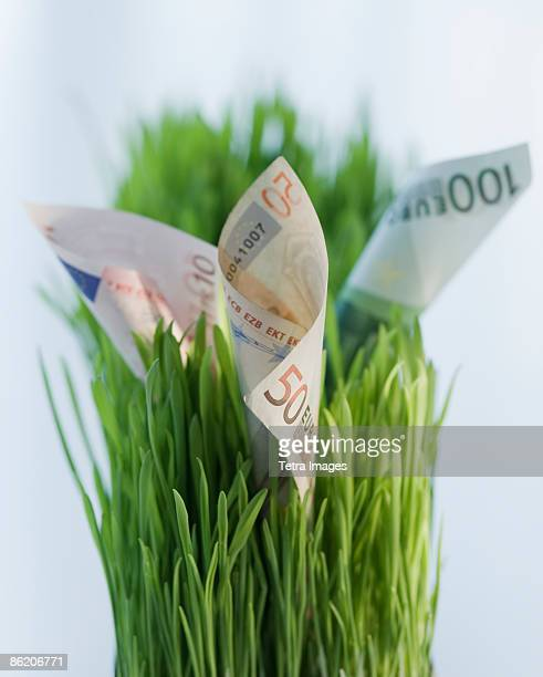 Close up of euros in grass