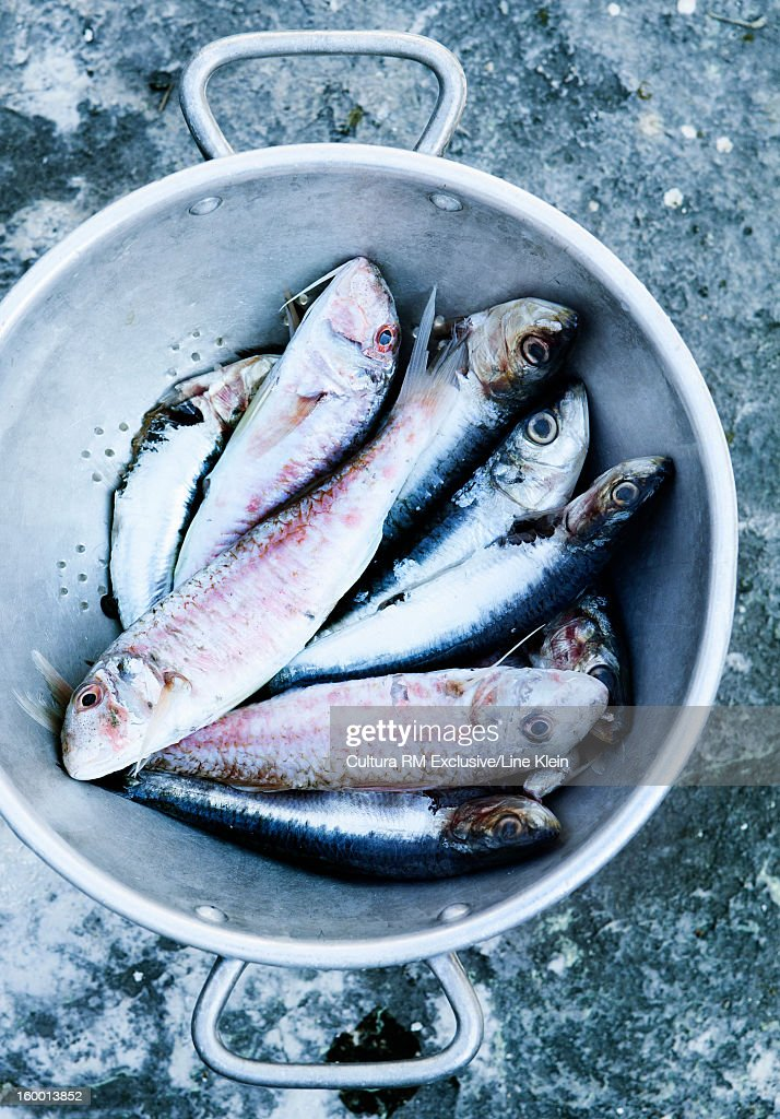 Close up of fish in strainer : Stock Photo