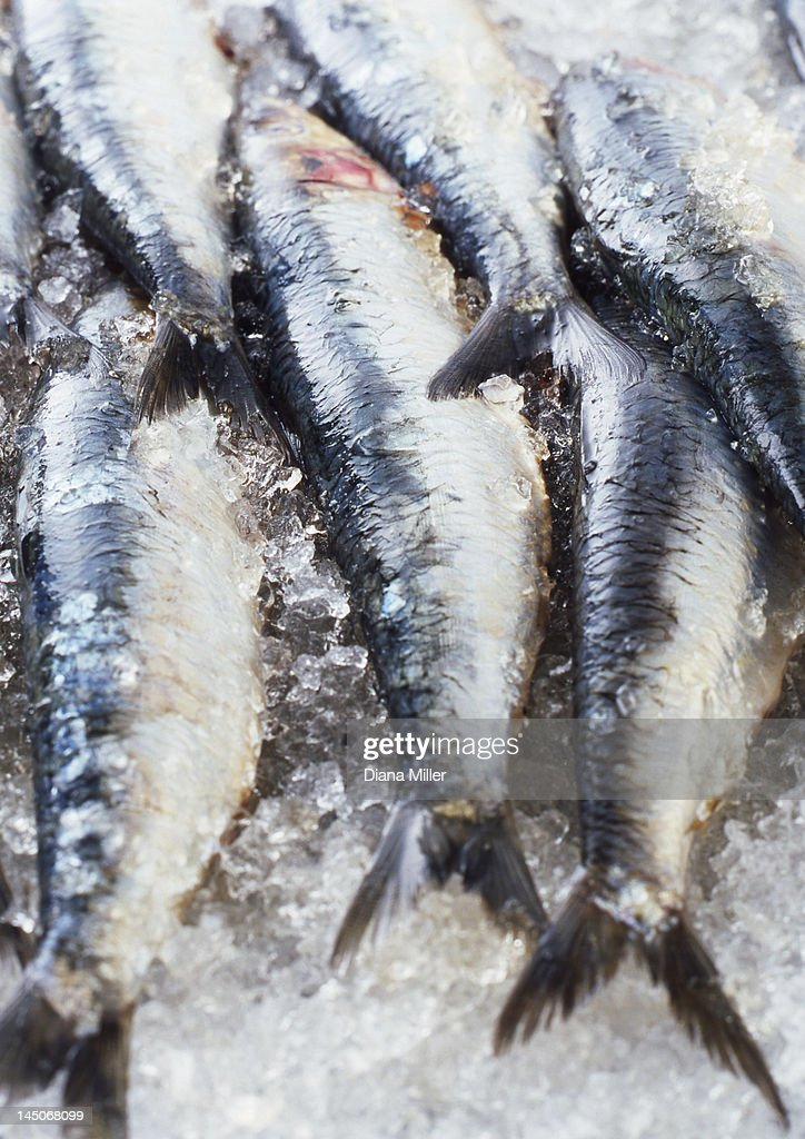 Close up of fish on ice for sale : Stock Photo