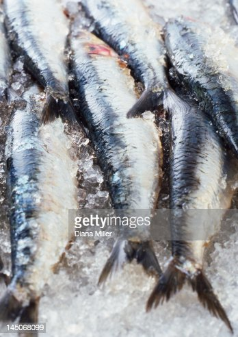 Close up of fish on ice for sale : Bildbanksbilder