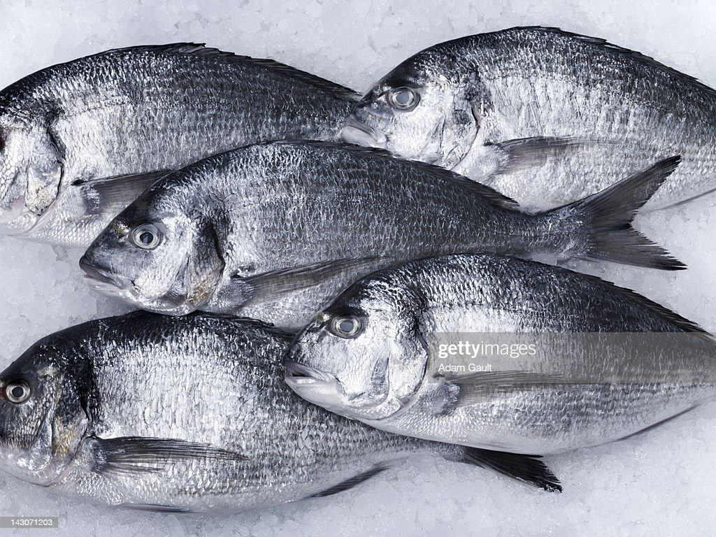 Close up of fish on ice : Stock Photo