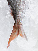 Close up of fish tail on ice