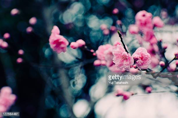 Close up of flower peach