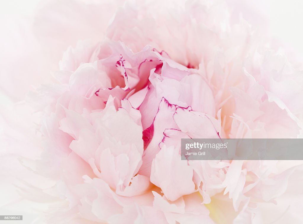 Close up of flower : Stock Photo