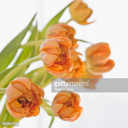 Close up of flowers : Stock Photo