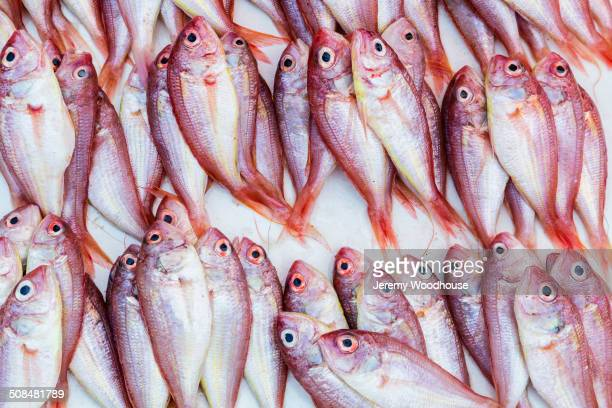 Fresh whole fish stock photos and pictures getty images for Whole foods fish on sale this week