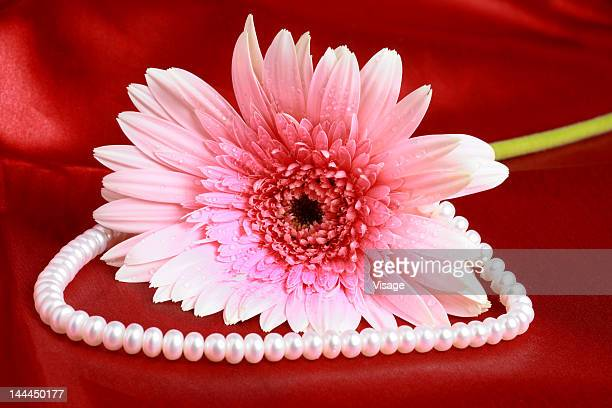 Close up of gerbera with pearl chain