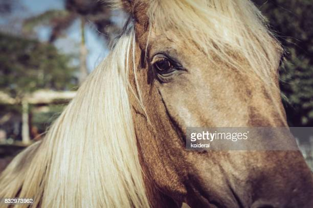close up of gold chestnut color horse