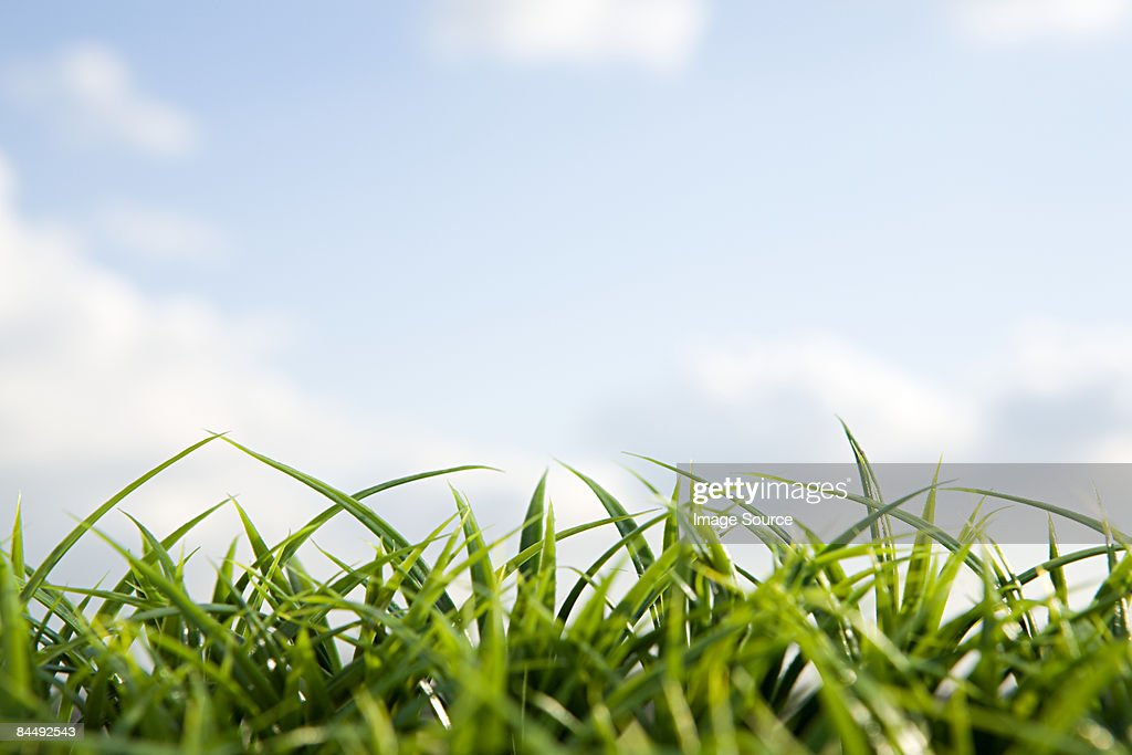 Close up of grass and sky : Stock Photo