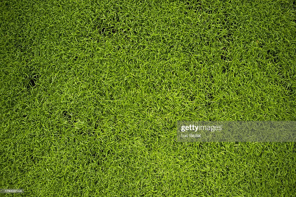 Close up of grass : Stock Photo