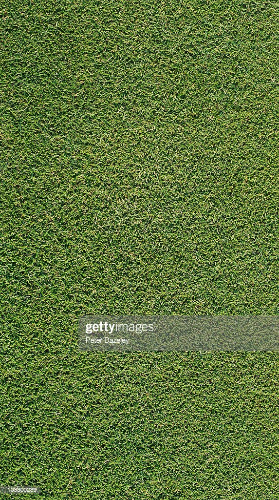 Close up of grass/golf green