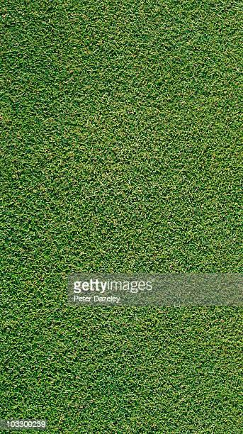 Close up of grass/golf green