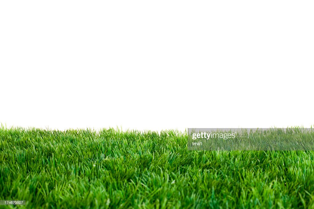 Close up of green grass with white background