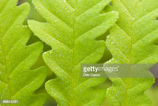 Close up of green leaf : Stock Photo