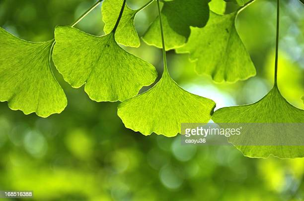 Close up of green leaves in sunlight